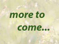 zzz_more-to-come