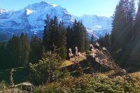 Mountain-View Trail